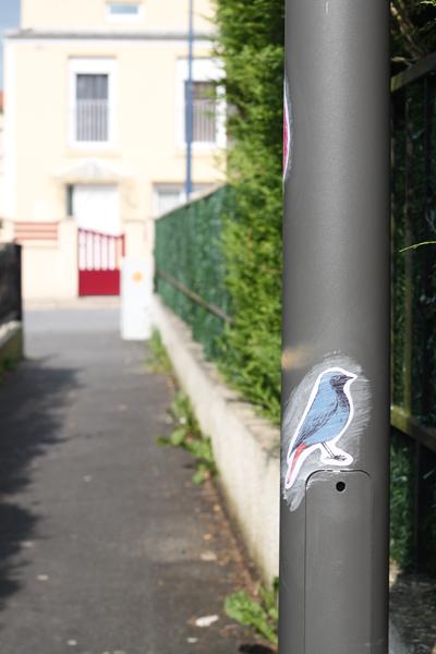 oiseaux-barbara-govin4