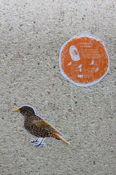 oiseaux-barbara-govin5