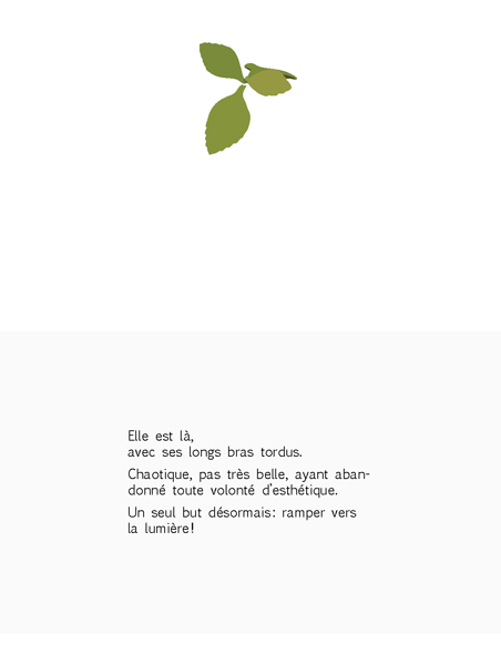 plante-pisse-au-vent-barbara-govin