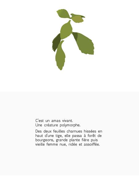 plante-pisse-au-vent-barbara-govin2