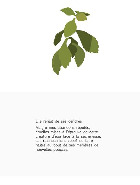 plante-pisse-au-vent-barbara-govin3