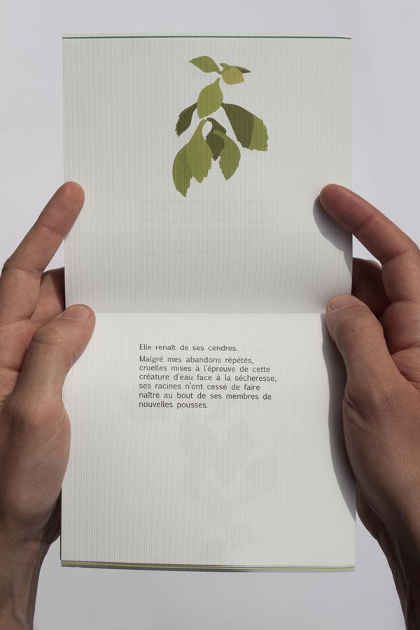 plante_9