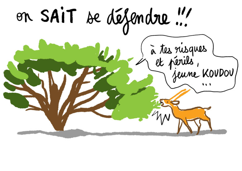 conference-dessinee-fbouteau-fontenay-2020-5